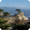 Pebble Beach/17-Mile Drive Water Damage and Mold Removal & Testing Services