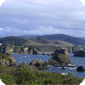 Mendocino Water Damage and Mold Removal & Testing Services